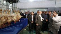 افتتاح مجتمع زنجیره ای تولید گوشت مرغ در اصفهان