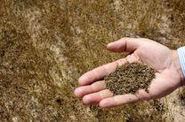پیش بینی برداشت 10 کیلوگرم  زیره از هر هکتار از مراتع نطنز