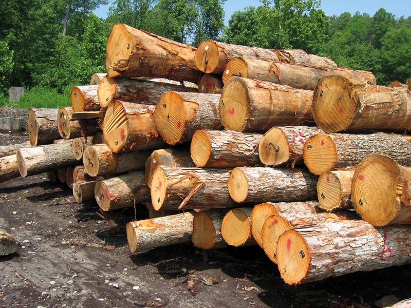 کشف و ضبط 3 خودروی حامل چوب درختان جنگلی در قلعه رئیسی