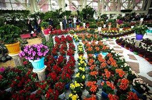 فعالیت 49 واحد گل و گیاهان زینتی در قائم شهر