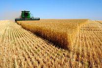 عرضه ۲۶۱ هزار تن گندم خوراکی ۱۰ استان کشور