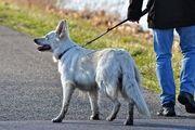 واکنش پلیس به برخورد نامناسب یک سرباز با پدیده سگ گردانی