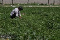 هدفگذاری جذب 9 هزار میلیارد تومان سرمایه صندوق های کشاورزی خوشبینانه است/تشکیل 17 صندوق در سال 97