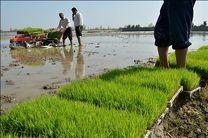 کاهش 70درصدی نشاکاری برنج در خوزستان