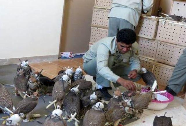 کشف و ضبط محموله بزرگ قاچاق پرنده/دستگیری 4 نفر