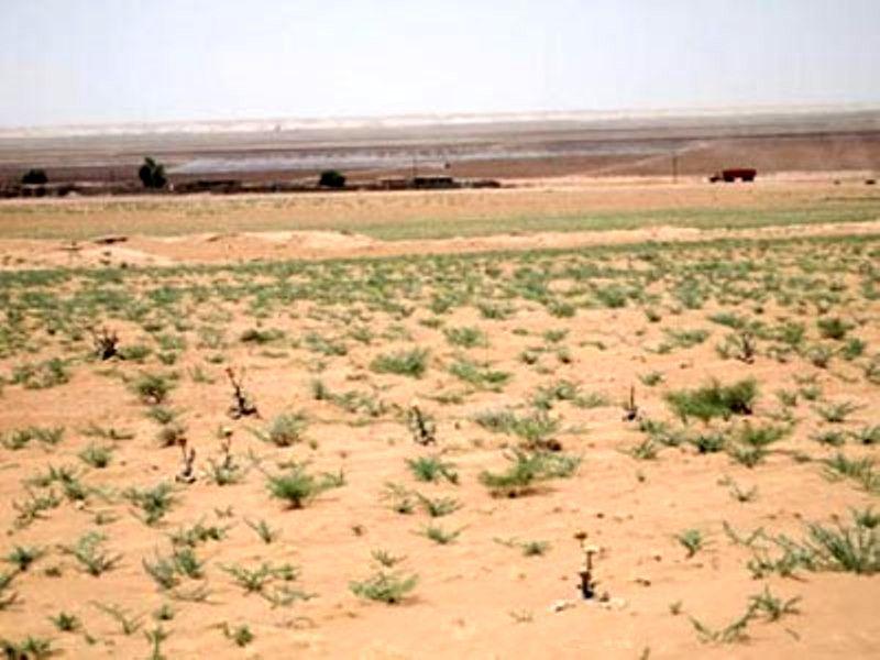 توسعه کشت در یزد نداریم و رویکرد نگهداری از جنگل های موجود است