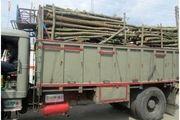 کشف 10 تن چوب قاچاق در شهرستان املش