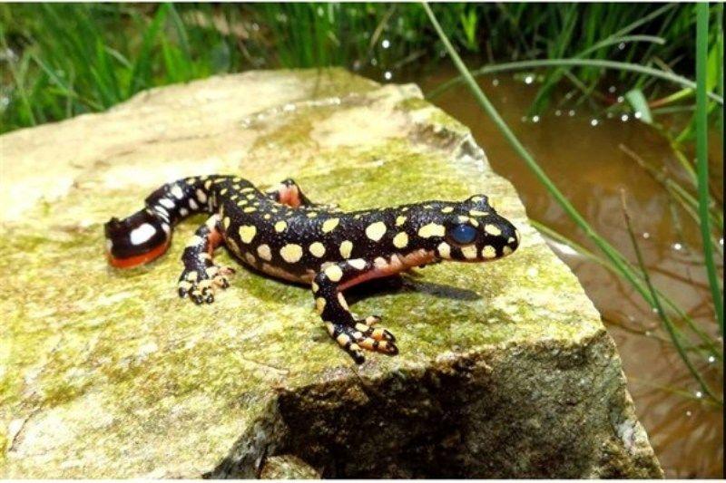 11  گونه جانوری و 100 گونه گیاهی اندمیک در لرستان شناسایی شده است