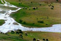 بهره برداری  ۳۶ هزار خانوار روستایی و عشایری از مراتع استان