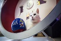 پیشگویی گربه روسی از بازی فرانسه و بلژیک