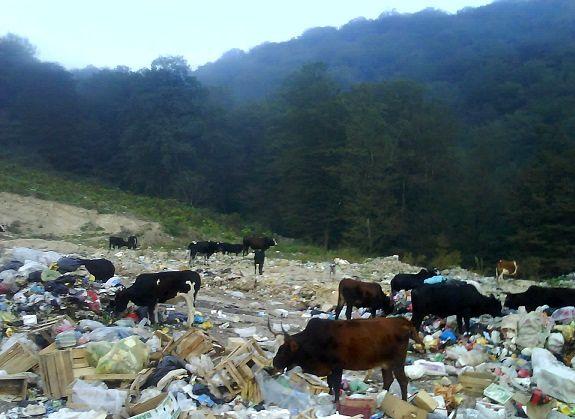 آلودگی های زیست محیطی از تهدیدات مهم تنوع زیستی