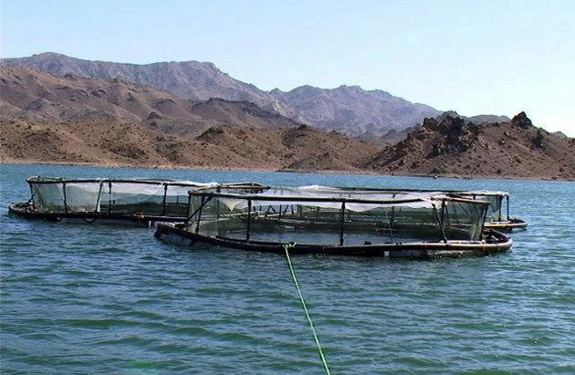 طرح پرورش ماهی در قفس در 5 سد استان لرستان اجرا شد