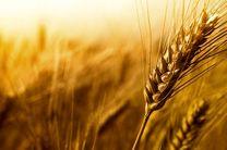 میزان خرید تضمینی گندم در استان همدان