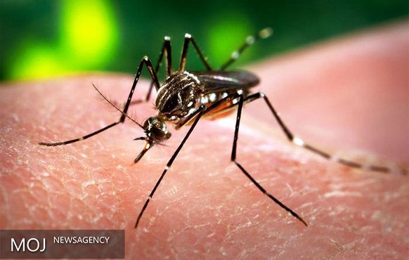 تله هوشمند برای مقابله با ویروس زیکا ساخته شد
