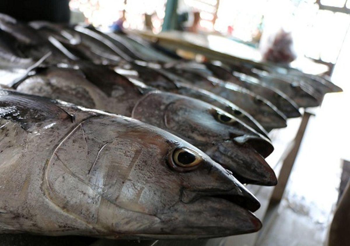 تهیه نرخنامه برای انواع ماهی در هرمزگان با ورود دستگاه قضایی