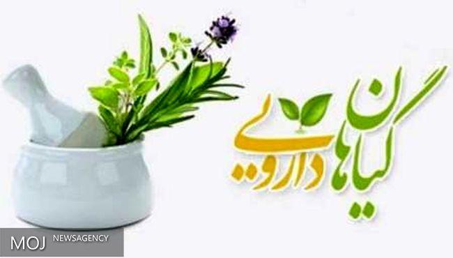 کشت گیاهان دارویی، ظرفیتی برای تولید و اشتغال است