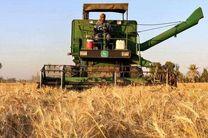 پیش بینی برداشت بیش از 11 هزار تن گندم از مزارع فریدن