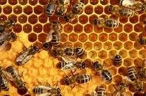 تولید نانوجاذبی برای اندازهگیری دقیق آفتکشها در عسل