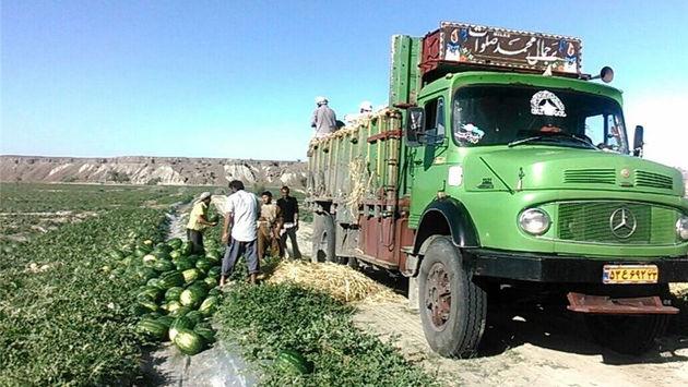 دومحصول کشاورزی هرمزگان ثبت ملی شدند
