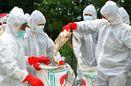 خسارت هزار و ۵۰۰ میلیارد تومانی آنفلوانزای فوق حاد پرندگان به صنعت مرغ داری کشور