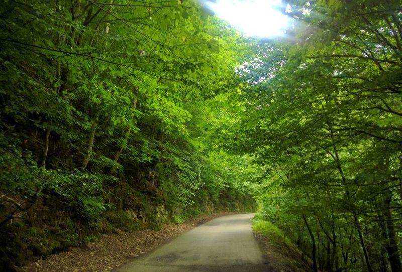مدیریت پایدار منابع ملی از طرح های ارزشمند دولت در حوزه جنگل است