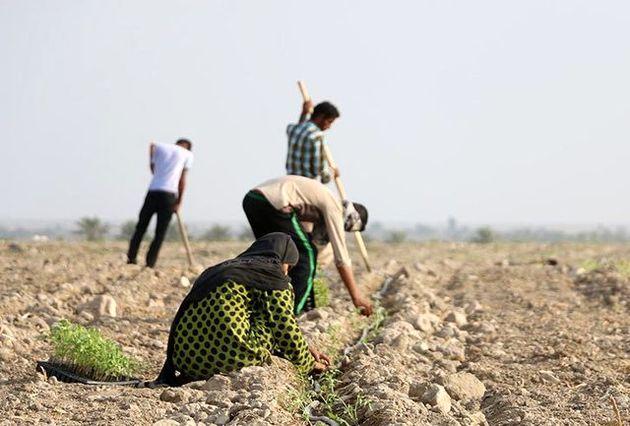 استعدادیابی 67 هکتار از اراضی ملی میناب