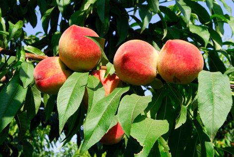 تولید بیش از یک میلیون تن انواع محصولات زراعی و باغی در پارس آباد