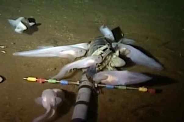 محققان نوعی ماهی در عمق ۸ هزار متری اقیانوس آرام کشف کردند