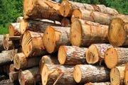 کشف 2.5 تن چوب جنگلی قاچاق در خلخال