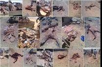 نفرین یمن تا سالها گریبانگیر عربستان خواهد بود
