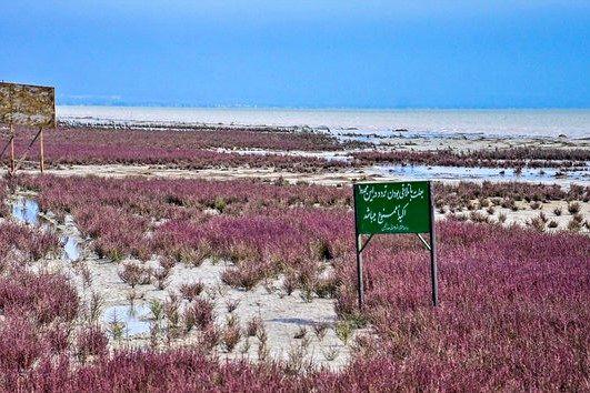 کانال های انتقال آب خلیج گرگان مسدود شده است