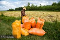 آیا واردات 1 میلیارد دلاربرنج به کشور با سیاست های اقتصاد مقاومتی همخوانی دارد؟