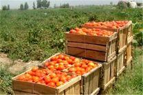 ۳۴۰ هزار تن محصولات کشاورزی در شهرستان رامیان تولید شد