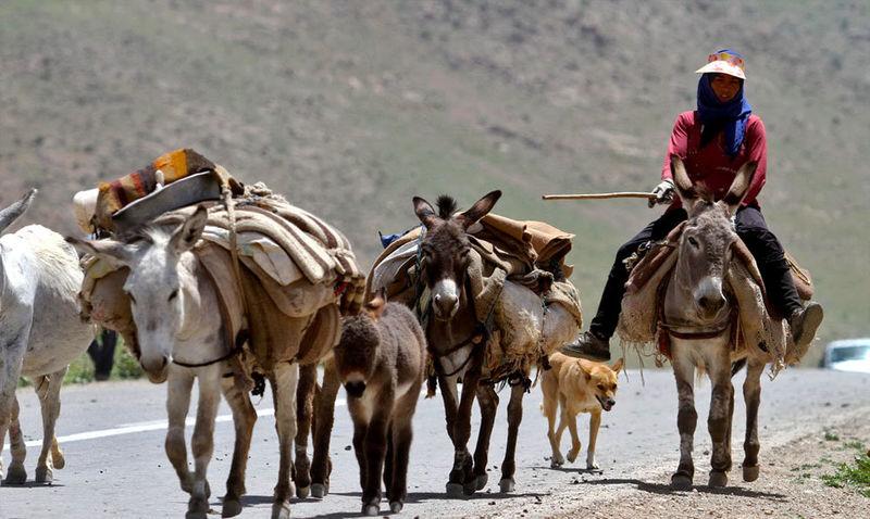 ورود نخستین گروه عشایر کوچرو به شهرستان شهرضا
