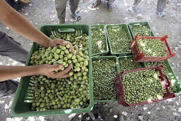 ظرفیت های کشاروزی، معدنی و صنایع استان زنجان بسیار بالاست