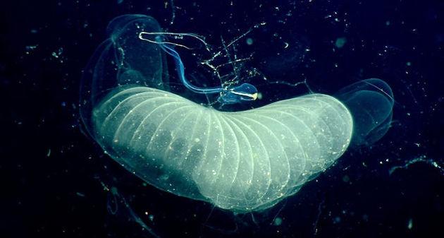کشف کرم آبی که دیاکسیدکربن میخورد