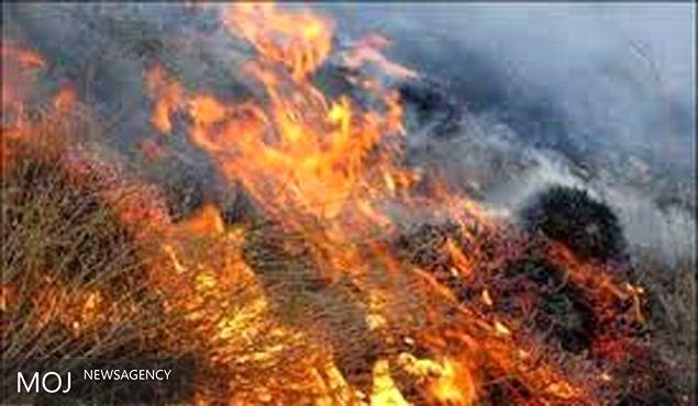 پرندگان جنگل تنوم زنده زنده در آتش کباب شدند