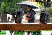 کاهش دما و بارندگی در استان های شمالی کشور/وزش باد هوای تهران را پاک می کند