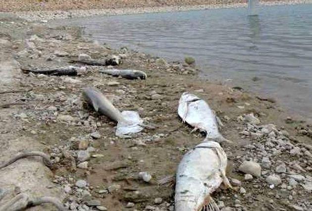 تلف شدن بیش از 3 میلیون قطعه ماهی در زلزله کرمانشاه