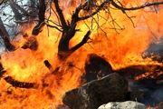 آتش سوزی جنگل های پلدختر تا این لحظه مهار نشده است