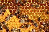 تولید ۹۰۰ تنی عسل در شهرستان تنکابن