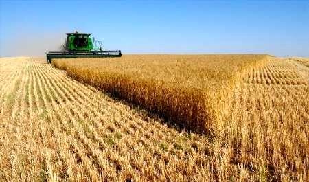 گندم کرمانشاه در رتبه دوم باکیفیتترین گندم کشور