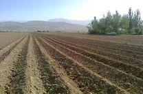 سال گذشته؛سال بسیار ناهنجار در کشاورزى /محصولات کشاورزى به روز پایش مى شوند