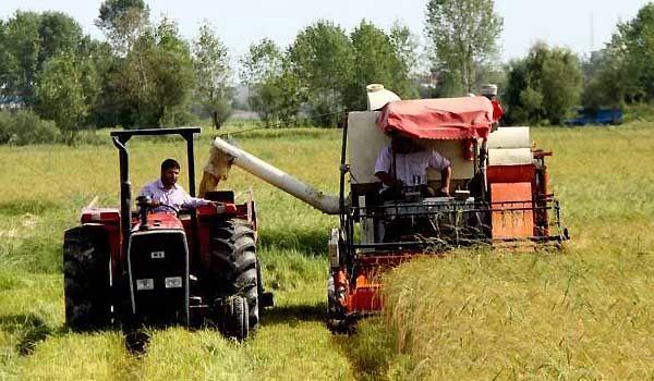 15 درصد تورم در بخش  باغداری، زراعت و دامداری