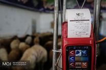 بازار عرضه بهداشتی دام در تهران