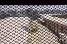 افشای شبکه زندانهای مخفی امارات در یمن با بازجویان آمریکایی