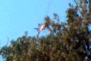 سقوط یک جنگنده اف-۲۲ آمریکا در این کشور