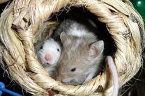 تولد موشهای سالم از اسپرم منجمد شده در فضا