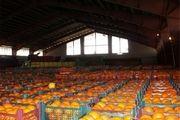 ذخیره سازی میوه در ایام نوروز بر عهده وزارت صنعت