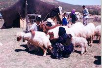 بیش از 14 هزار خانوار عشایری در کرمانشاه زندگی می کنند